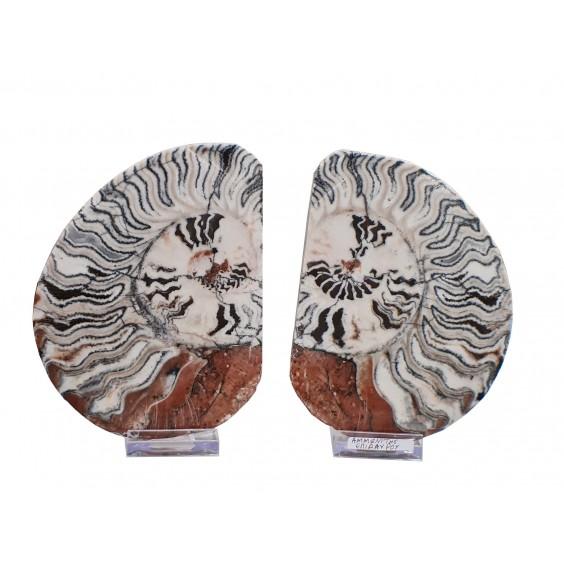 Αμμωνίτες Επιδαύρου ζευγάρι