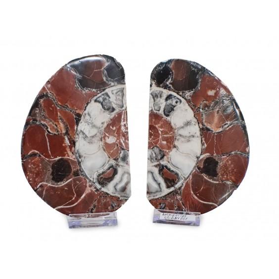 Αμμωνίτες Επιδαύρου ζευγάρι4