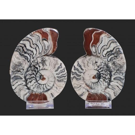 Αμμωνίτες ζευγάρι (Επίδαυρος, Ελλάδα)